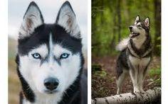 Resultado de imagem para cachorro mais lindo do mundo
