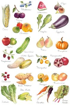 Fruits and Vegetables Print 11x17 by thelittlecanoe on Etsy, $30.00