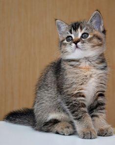 Cute Kitten <3
