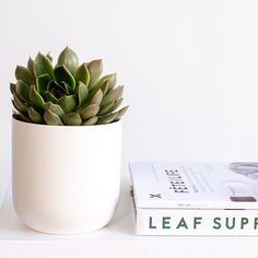 Can't find the perfect gift? Everyone loves succulents! Terrarium Plants, Succulent Terrarium, Buy Succulents Online, Hens And Chicks, Snake Plant, Aloe Vera, Gifts For Him, Greenery, Planter Pots