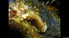 Bióloga apresenta grande variedade de espécies de moluscos marinhos