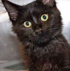 Homeless animals like Gidget the cat need help. A devestating 10,000 animals die daily in shelters across the U.S. There are MANY things YOU can...