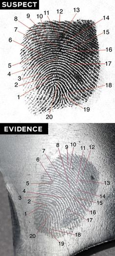 Forensic Science: Dactyloscopy Is this a finger print of the suspect? Forensic Psychology, Forensic Science, Science Fair, Life Science, Science Books, Detective, Forensic Anthropology, Criminal Justice System, Environmental Science