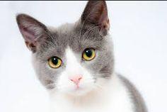 lovely cat,do you like?