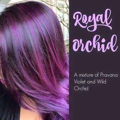 Hair Color Purple, Hair Color And Cut, Haircut And Color, Cool Hair Color, Hair Colors, Purple Brown Hair, Orchid Color, Dark Purple, Violet Hair