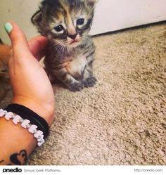 Bakışlarıyla kendini sevdiren bu üzgün kedicik,
