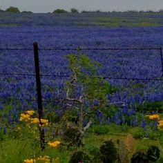 Keep Texas beautiful....