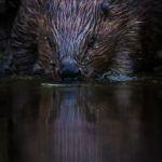 Photo workshop: Sweden's wildlife & nature med Niklas Virsen