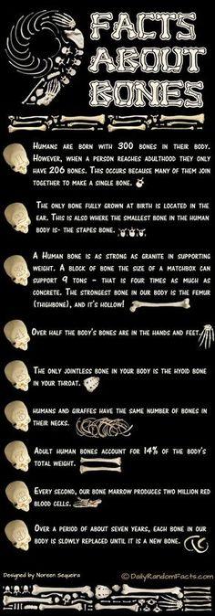 bone-facts-530