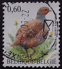 Grey Partridge - Perdix perdix ('(p_khoo)) Tags: bird birds belgium stamp