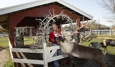 EnjoyIllinois.com | Hardy's Reindeer Ranch