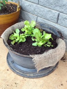 Homesteading Survivalism: Edible Plants You Can Grow on a Shade    Making the Most of Shade: How to Plan, Plant, and Grow a Fabulous Garden that Lightens up the Shadows :  http://cutt.us/k5gI
