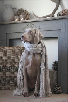 Nieuwe photodiary online! Bekijk de sfeervolle woonweek van Nicole op http://www.dewemelaer.nl/?p=9336