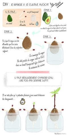 I EAT AND I CULTIVATE LAWYER? After tasting an avocado, we don't throw … You are in the right place about avocado dessert Here we offer you the most beautiful pictures about the avocado dressing … Permaculture, Diy Jardim, Green Life, Flower Wallpaper, Zero Waste, Diy For Kids, Food Videos, Gardening Tips, Planting Flowers