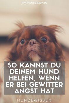 Hund und Gewitter - viele Hunde fürchten sich, wenn es knallt und blitzt. So kannst du deinen Hund in der Situation unterstützen.Hund Angst | Hund Gewitter | Gewitterangst Hund | Hundewissen