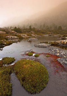 Tarn Shelf - Mt Field National Park - Tasmania