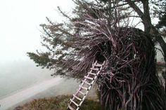 Californian tree nests: Inspired by birds, built for people