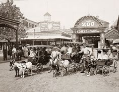 This image was taken at Coney Island in about 1900, and shows goat-drawn Surrey Wagons.