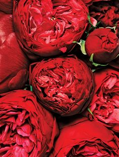 Peony and Dutch spray garden roses, $385 by Stellar Style Events.  Photo: Bobby Doherty