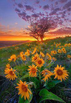 Fiori di campo al tramonto...