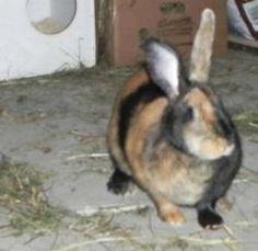 klikni pro další 4/8 Animals, Animales, Animaux, Animal, Animais