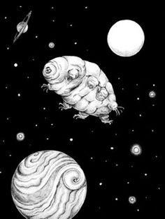 Los Tardígrados pueden vivir en el espacio. #Animales.