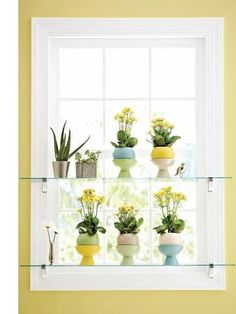 Plants on glass shelves in front of a window! (From the Feb 2011 issue of Better Homes & Gardens) by kimberly