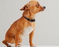 Adestramento de cães, cachorros para adoção, cães para adoção, adotar cachorro, roupas para cachorro, cama para cachorro, cachorros