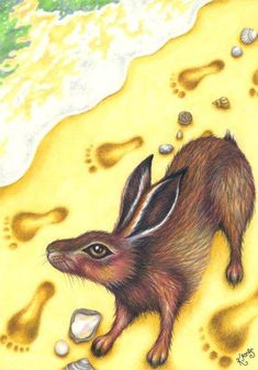 Brown Hare Greeting Card - on the beach, ocean's edge. Watercolor Illustration, Hare Illustration, Watercolour, Illustrations, Sea And Ocean, Blank Cards, Original Image, Sea Creatures, Wildlife Photography