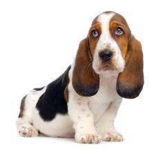 TGIF :) What is the quietest kind of a dog? A hush puppy