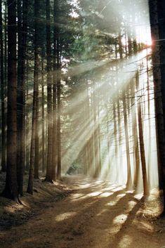 Geist weht Wald Fotografie Ideen inspiredluv (20)