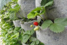 Las 10 hortalizas y plantas perfectas para utilizar en cultivos verticales y urbanos - Grow Your Own Food, Vegetable Garden, Strawberry, Fruit, Vegetables, Outdoor, Gardens, Space, Vertical Gardens