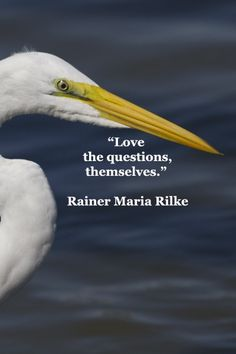 """Love the questions themselves."" —Rainer Maria Rilke"