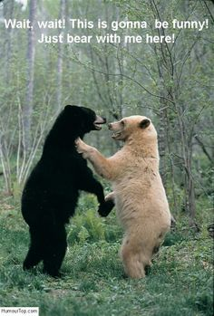 Ours blanc qui s'amuse avec un ours noir