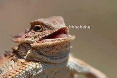 Hehehe lizard - ReactionFace