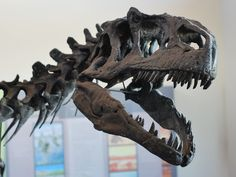 What Killed the Dinosaurs in Utah's Giant Jurassic Death Pit? | Science | Smithsonian