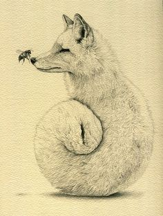 Amy Dover - The Fox And The Bee, 2012 Drawings