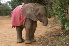 Baby elephants suck their trunk the same way humans suck their thumbs Fascinating Pictures (@Fascinatingpics)   Twitter