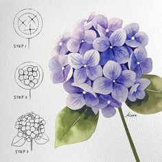 Flower Drawing Tutorials, Art Tutorials, Flower Canvas, Flower Art, Watercolor Flowers, Watercolor Art, Hydrangea Colors, Smart Art, Flower Doodles