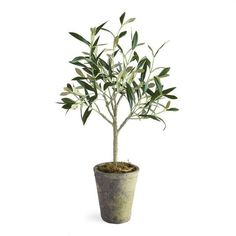 Faux Olive Tree – Pacific Design Co. #olivetree #fauxplant #fauxtree #decorativetree