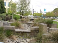 This is the rain garden at the Oregon Convention Center, Portland, Oregon