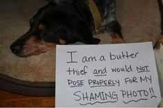 Butter is my downfall too! LOL #DogShamingFlashbacks