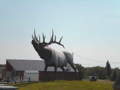 Big Elk at Onanole, Manitoba