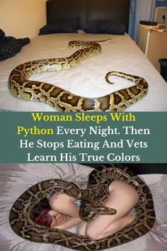As animal lovers, it's easy to understand why people let their pets sleep with them in bed at night. Dogs and cats are soft and snuggly, so they make great cuddle partners. Even curling up with a ferret or a bunny rabbit isn't out of the ordinary. But, how about a python?