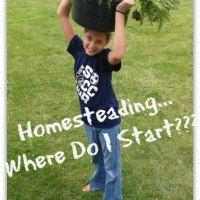 Homesteading...Where Do I Start??? (5 quick tips)  Just added my InLinkz link here: http://smalltownhomestead.com/modern-homesteading-blog-hop-7/