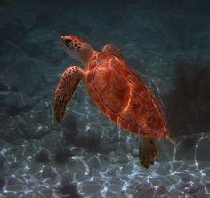 Snorkeling Caneel Ba