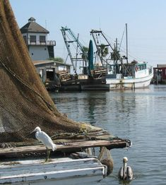 another one from my area. Lots of shrimp boats!