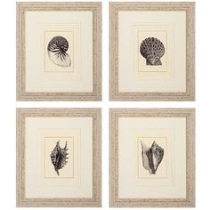 Propac Images Shell 4 Piece Framed Graphic Art Set
