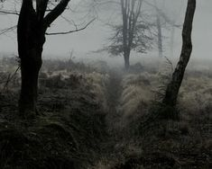 Dark forest | The North Realm
