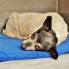 3/19/17 A Long Island man has been sentenced to jail after throwing a Chihuahua out of a third story window in August 2016.Dorian Quezada, 21,pleaded guilty to aggravated animal cruelty in front of Queens Criminal Court Judge Toni M. Cimino last month. On Wednesday, Acting Supreme Court Justice Suzanne Melendez sentenced Quezada to one year in …